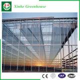 Serre chaude en verre de Multi-Envergure d'agriculture pour des légumes