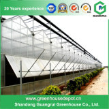 La serre en verre de bonne qualité pour les systèmes de culture hydroponique