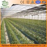 Multi serra agricola del film di materia plastica della portata in Cina