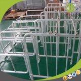 Stalle chaude de gestation de Gganlanized pour des matériels de porcherie