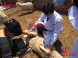 Hospital Veterinario Ecógrafo equinos, bovinos, Obvine, perros, gatos, el equipo Veterrinary instrumento, el veterinario, Veterinario Ultrasonido