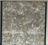 Marmeren kijk de Ceramische Tegel van de Vloer 60X60