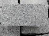 [غ601], [غ602], [غ603]. [غ654], [بف ستون] رماديّة سوداء