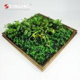 Nuova parete della barriera di verde della pianta di arte 3D di basso costo di disegno per la decorazione