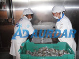 Kaltlagerungs-Raum für Fleisch und Fische