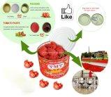 Migliore fornitore dell'inserimento di pomodoro della Cina