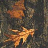 فائقة نوعية [تسوتوب] [0.5م] عربية تمويه وشجرة ماء إنتقال طباعة فيلم [هدرو] ينخفض فيلم [هدروغرفيكس] فيلم [تسمك32-4]