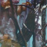 فائقة نوعية [تسوتوب] [0.5م] عرض تمويه وشجرة ماء إنتقال طباعة فيلم [هدرو] طباعة فيلم [هدروغرفيكس] فيلم [تسمو1038]
