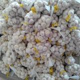 Aglio bianco fresco cinese con piccolo imballaggio