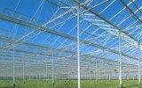 Tipo serra di vetro di Venlo per la mini crescita del pomodoro