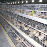 De Apparatuur van het Landbouwbedrijf van het gevogelte en het Kleine Systeem van de Kooien van de Kip (van de Jonge kip)