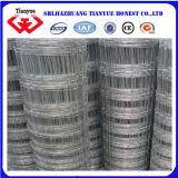 Reti fisse galvanizzate tuffate calde del pascolo (TYB-603)