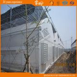 Seeding를 위한 Netherland Technology 다중 Span Film Greenhouse