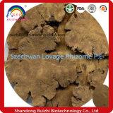 Orgánicos profesional Szechwan Lovage rizoma P. E con una buena calidad