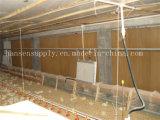 Le poulet Chambre ferme avicole Ferme de patin de refroidissement de la vache mur de refroidissement