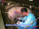 가축을%s 소형 휴대용 초음파 스캐너, 암소, 말 재생산, 세륨 ISO