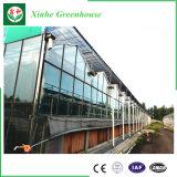 Invernadero de cristal para el anuncio publicitario del surtidor de China con bajo costo