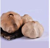 발효작용에서 영양 힘 단 하나 까만 마늘