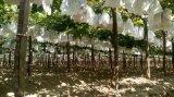 Qualität passte Wegwerffrucht-Deckel-Granatapfel-Papierbeutel an