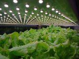 El LED impermeable crece ligero para la fábrica de la planta
