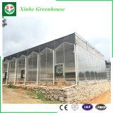 ガラス温室のいちごおよびローズのためのプラスチック温室のパソコンシートの温室