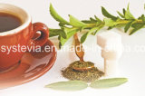 低価格のSteviosideの純粋で自然なStevia