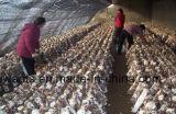Alto esterilizador técnico de la cultivación de la seta con el mejor precio