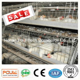 Système de cage de poulet de ferme avicole