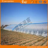 Haltbares Solar-Greenhouse mit Plastic Film Covered
