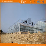 F-Clean durevole Multi-Span Film Greenhouse con Glass Wall