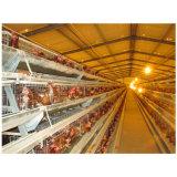 Matériel automatique d'agriculture de volaille de cage de couche de poulet de ferme avicole