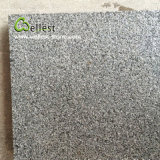 G654中国のインパラのブッシュによって槌で打たれる花こう岩の床タイル