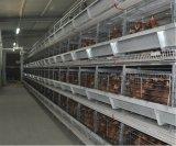 H Apparatuur van de Kooi van de Kip van het Ei van de Laag van het Landbouwbedrijf van het Gevogelte van de Goede Kwaliteit van de Prijs van het Type de Beste