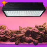 Volle Pflanze des Spektrum-LED wachsen für das Wasserkultur Gewächshaus hell