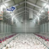 Fácil ensamblar la casa comercial del pollo tomatero