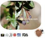 Clorhidrato natural puro el 97% el ~98% de Berberine del extracto del bérbero de Berberine el 10%