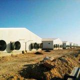 Cage de poulet pour maison de volaille avec installation de maison préfabriquée