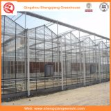 Jardim / Fazenda / Túnel Multi-Span Polycarbonate Sheet Green Houses for Rose / Batata