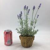 Caixa de madeira com as plantas artificiais da alfazema Potted