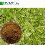 Выдержка зеленого чая для еды и питья