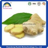 Extrait de légumes frais poudre de gingembre séchée pour le thé à bulles