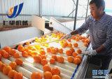 2017년 망고 주스 생산 라인 또는 사과 주스 생산 라인