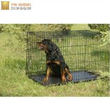 Cassa portatile del cane della maglia del nastro metallico
