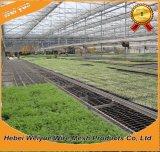 農業の温室の減退および流れの圧延のSeedbed