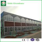 Lange Nutzungsdauer-multi Überspannungs-Glasgewächshaus-Blumen-Haus