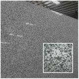 高貴なほんの少しのローザClassico Bianco Sardo G439の完全な花こう岩の平板