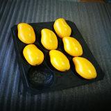 WegwerfCustomed pp. Plastiktellersegment für Mangofrucht mit Teilern