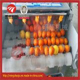야채 & 과일 솔 세탁기 병렬 솔 롤러 땅콩 청소 세탁기