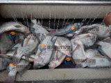 Escala de peixe industrial automática removendo máquina de processamento de escala