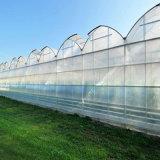 Invernadero caliente de la Plástico-Película de Multispan de la venta para Growing vegetal